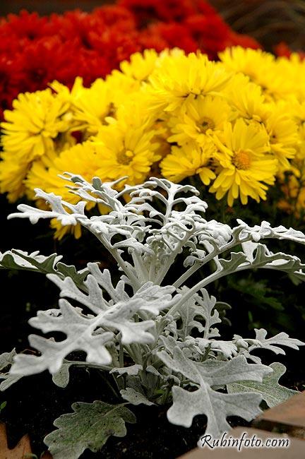 Flower_Germany.jpg