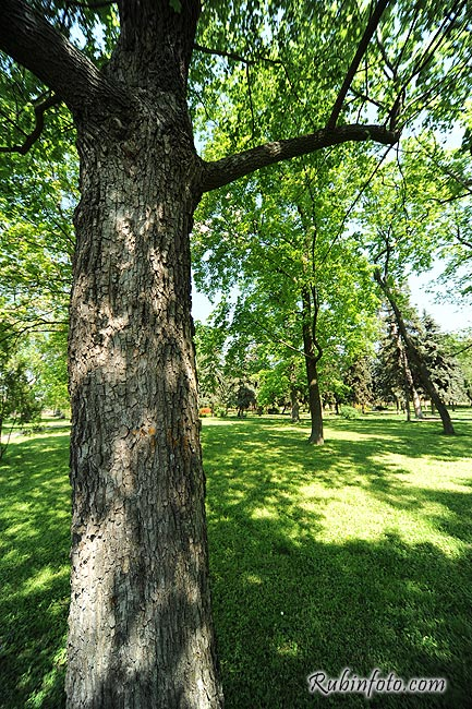 Tree_Sered_SR.jpg